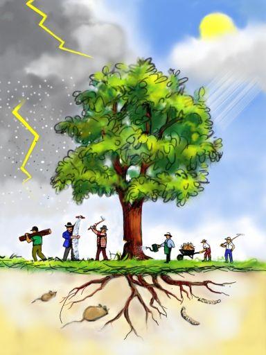 tree_coaching_01